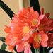 Un petit bouquet de mes fleurs