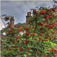 Berry St Edmunds