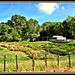 Taranaki Farm .