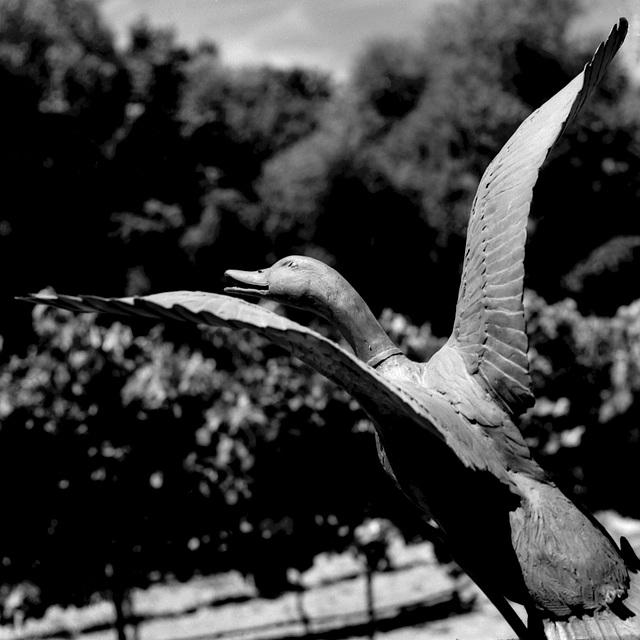 Duck Shoot
