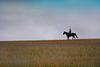 Einsamer Reiter auf weiter Flur - Lonely rider on wide open fields