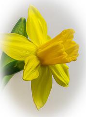 Jetzt schon an den Frühling denken ...