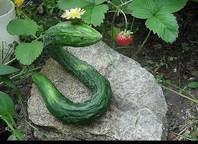 Gestaltung in der Natur