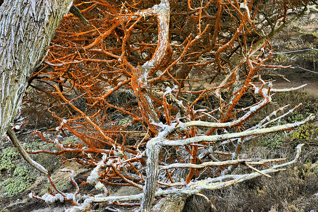 Red Moss – Point Lobos State Natural Reserve, California