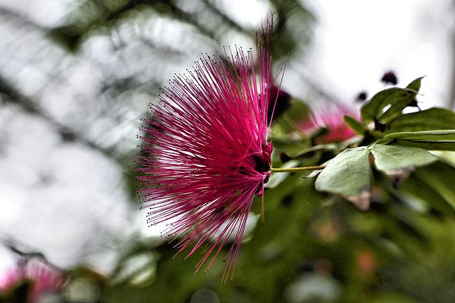 Semi Silhouette – Brooklyn Botanic Garden, New York, New York