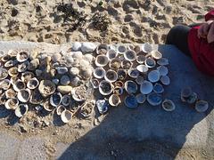 trésors de la mer,