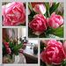 Peony-flowered Tulips