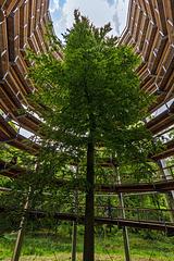 Baum im Aussichtsturm