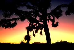 dream beneath the desert sky