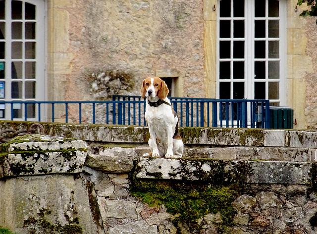 La chientelaine du château de Drée [ON EXPLORE]