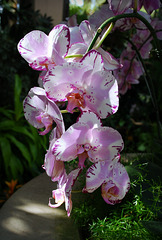 Orchids at Longwood