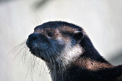 Mme loutre