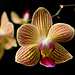 Sept 16: orchid
