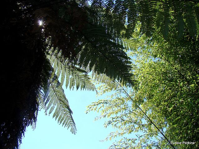Green Leaves on Blue Sky