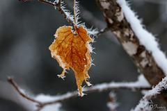 Vestige de l'automne . . .