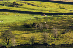 Local Landscapes usually have more sheep than trees