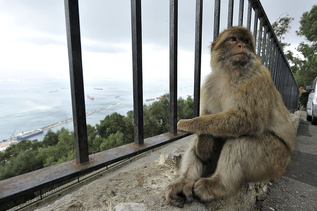 HFF from Gibraltar & some monkey business