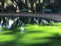 Blooming algae