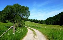 DE - Hürtgenwald - On the Kalltal trail