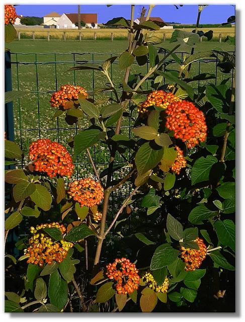 Photo d'un arbuste décoratif envoyé par un ami