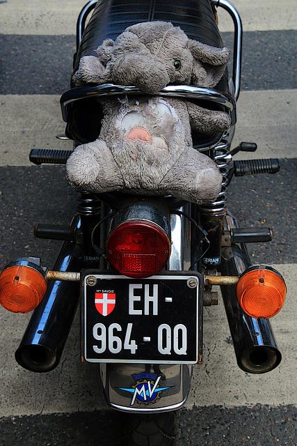 Arrêtons la cruauté envers les éléphanteaux , celui-ci roule sans casque et sans gants , en plus sur une MV-Agusta .