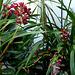 Dans mon jardin d'hiver