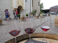 Weinprobe in der Kellerei von Girlan