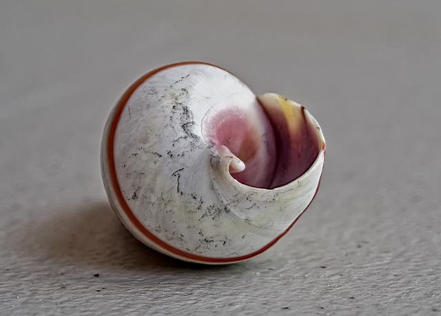 Shell.   7317706
