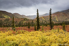 Fall Colors on Dempster Highway