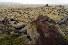 Cetraria islandica, Moss
