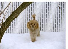 Elle aime jouer dans la neige !