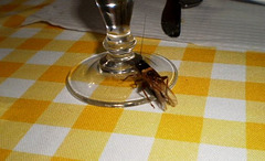 Suddenly, on the dinner table...