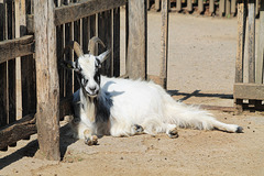 HFF says the goat...................:)
