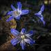 #4 wildflowers