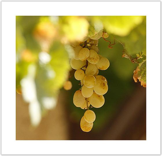 Plus belle la vigne.........