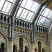 Steel Glass and Stone – Natural History Museum, South Kensington, London, England