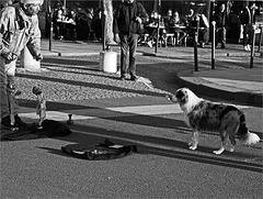 Le marionnettiste et le chien