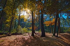 Die Liebe ist ein Frühlingsklischee für dich. Du willst nur seine schönsten Farben sehen, doch ignorierst dabei den Herbst.