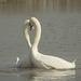 Swan Lake 02