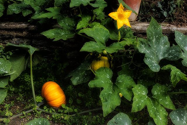 Ambiance d'automne.