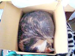 Honey Asleep in a Cardboard Box