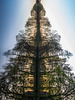 90˚ > Ein Traum von Baum