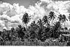 Dominican jungle: HFF
