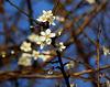 spring in December !!!