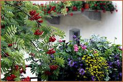 Palette de couleurs florales