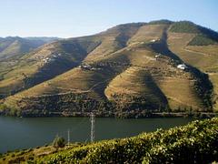 Douro vineyards landscape - UNESCO heritage since 2001.