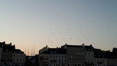 Les Oiseaux ..........!