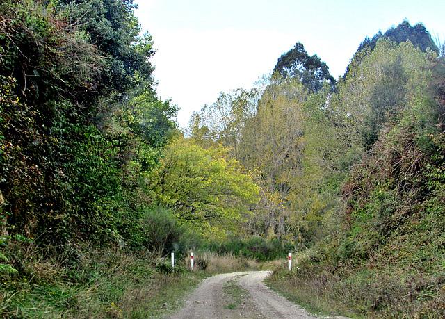 Rural Track.