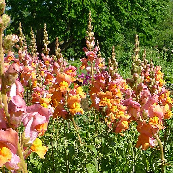 Sweden - Lund, Botanical Garden