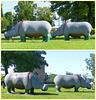 Hippos - 16 July 2021